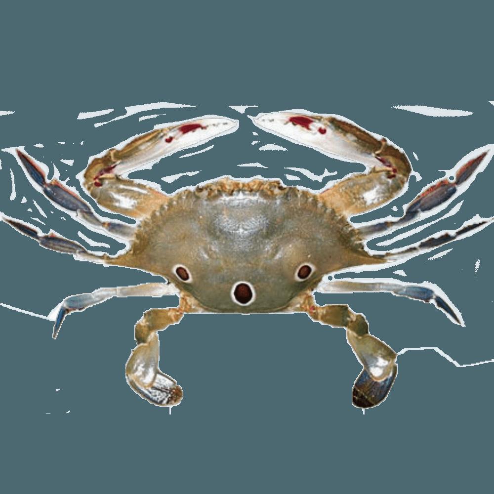 3 spot crab